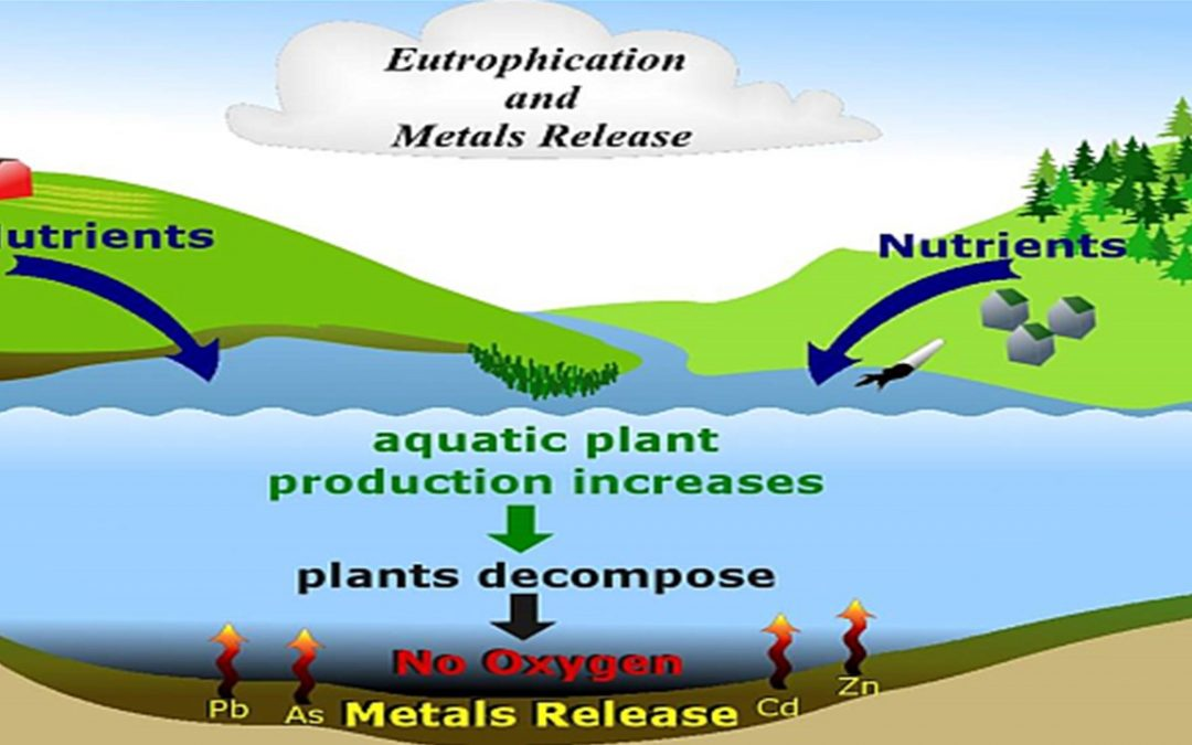OUR GEM: Heavy metals in our watershed